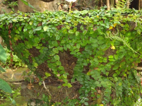Tropical Plants 6